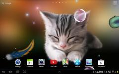 Love Cats? Here's an Idea: Cat Wallpaper