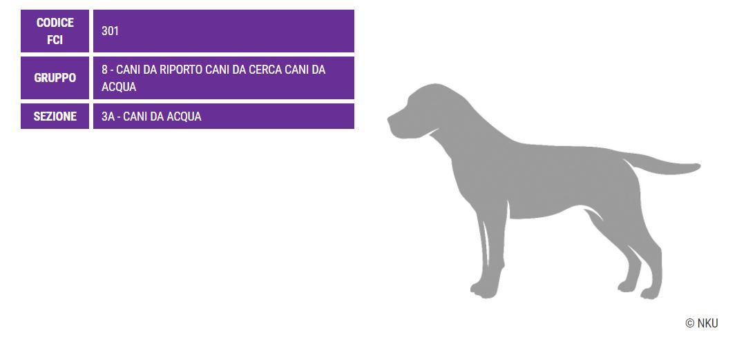 American Water Spaniel, caratteristiche - Razze Cani