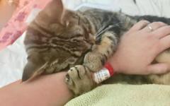 Gatto in difficoltà salvato da una donna dallo stesso passato