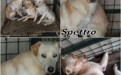 Appello per adozione: tre dolci cuccioli cercano casa