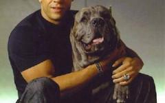 Vin Diesel y su afición por los perros grandes