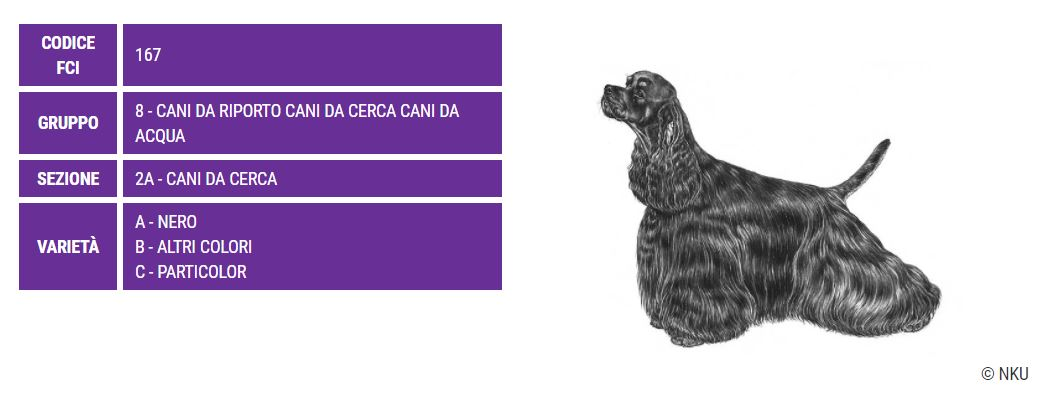 Cocker Americano, carattere e prezzo - Razze cani