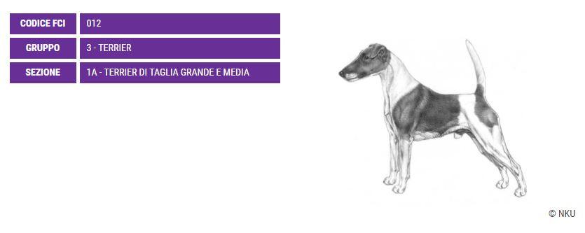 Fox terrier, carattere e prezzo - Razze cani