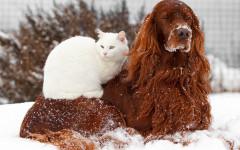 Cani e gatti in inverno: 10 regole per il loro benessere