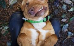 Picasso, il cane deformato diventato famoso ha trovato casa