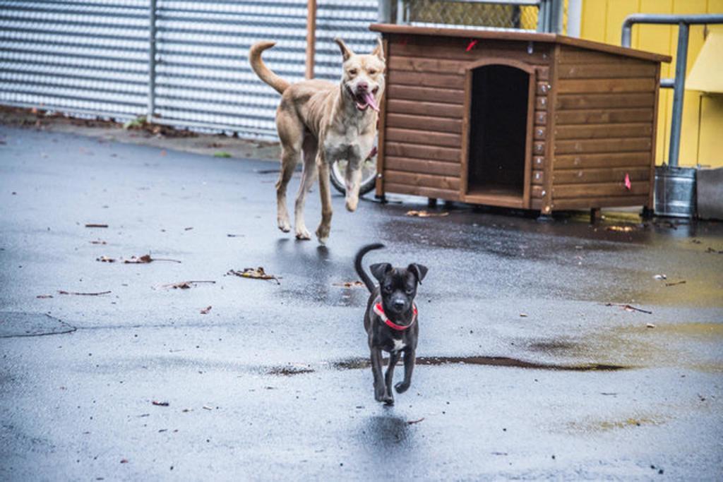 Cani inseparabili: Felix e Oscar sempre insieme