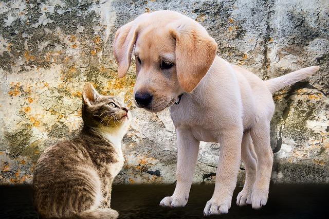 Pericoli in casa per cane e gatto: come evitare gli incidenti domestici