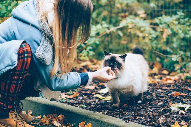 Gatto mangia cose strane, che cosa fare?