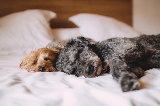 Dormire con il cane migliora la qualità del sonno?