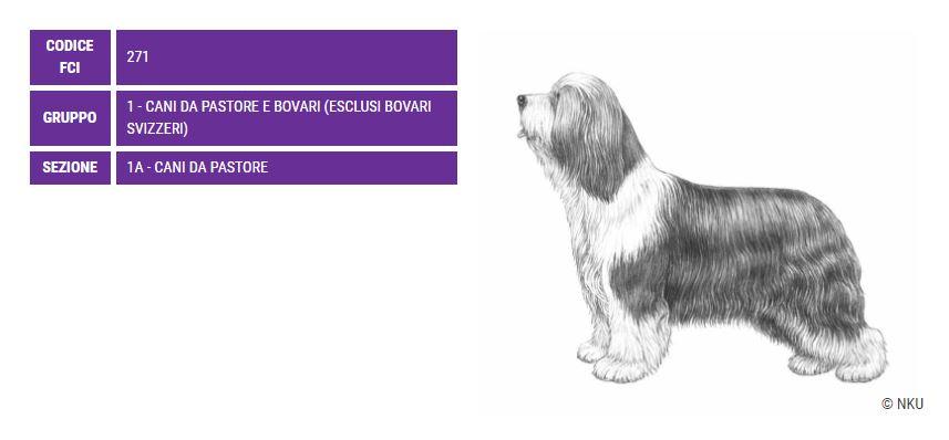 Bearded Collie, carattere e prezzo - Razze cani