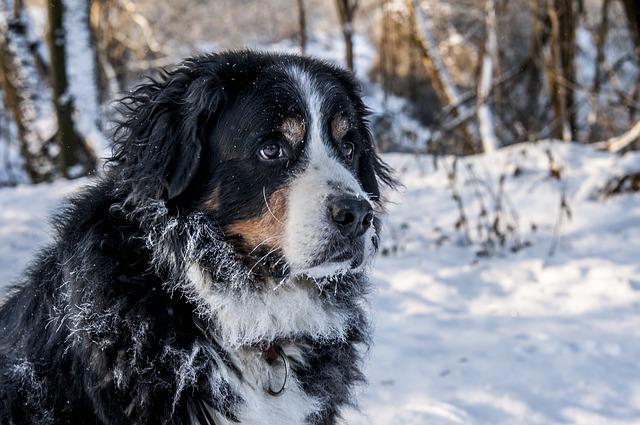 Come proteggere cani dal freddo quando arriva l'inverno?