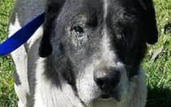 Buster, il cane legato a un blocco di cemento è salvo