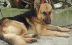 Cane preso a calci: uomo condannato a sei mesi di carcere