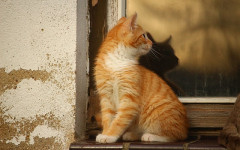 Mettere in sicurezza balconi per gatti: ecco alcuni consigli