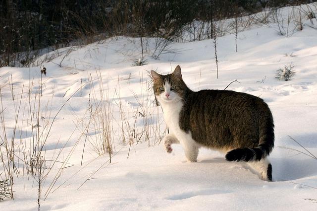Vita dei gatti in inverno: cosa fare per non metterla a rischio