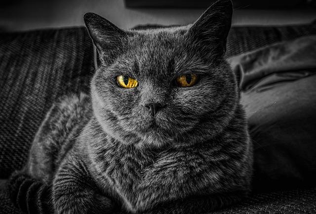 Tiña en gatos: una enfermedad común en los gatos