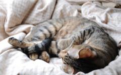 Creare un giaciglio per gatto, vediamo come fare