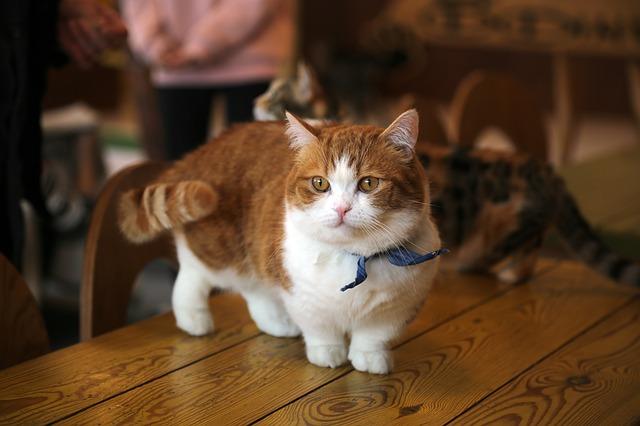 Coda del gatto: che utilizzo ne fanno i felini?