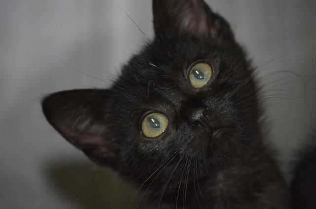 Gatto Nero Day: la giornata contro la superstizione