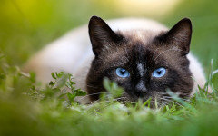 Drontal gatos: un eficaz antiparasitario o antihelmintico