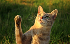 Cat Paws: Let's see some Fascinating Facts About Cat Paws