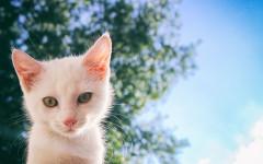10 fasi da superare per sopravvivere al gatto mattiniero