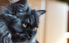 Gatto che sporca in giro: avete davvero fatto di tutto?