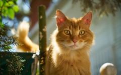 Pene de gato: la dolorosa reproducción felina
