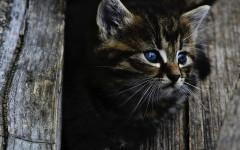 Gatto perde pelo: che fare? Ecco tutti i consigli
