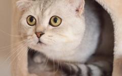 Le 9 cose che ogni gatto vorrebbe per essere felice