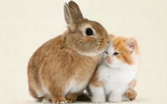 Gatti e conigli in casa: una strana convivenza domestica
