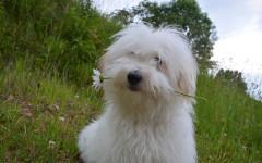 6 cose da sapere sui cani di piccola taglia: quali sono?