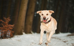 Dog Run: Building the best Dog Run for your Pet