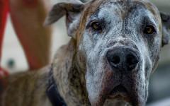 Cane anziano: come cambia la vita di Fido dopo i 10 anni?