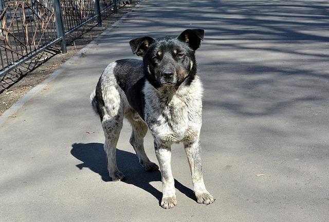 Bonus per chi adotta un cane: iniziativa del Comune di Nardò