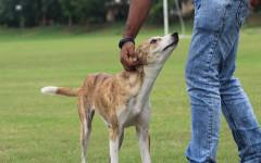 Insegnare al cane a non saltare sulle persone: come fare?