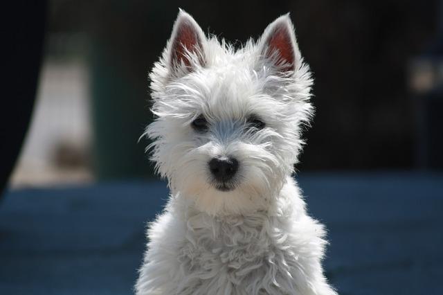 Il cane può mangiare il prosciutto? Sia crudo che cotto?