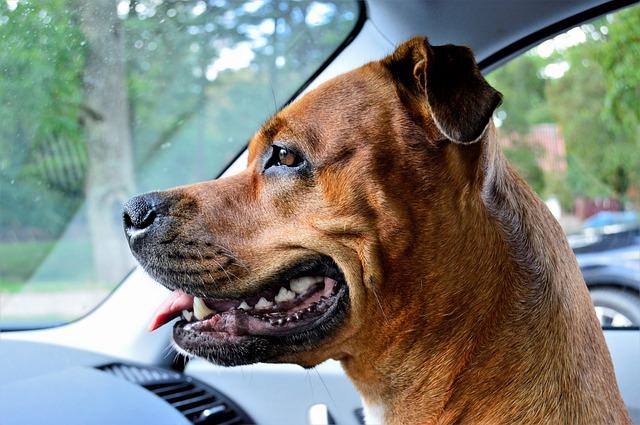 Denti del cane: come cambiano da cucciolo a cane adulto?