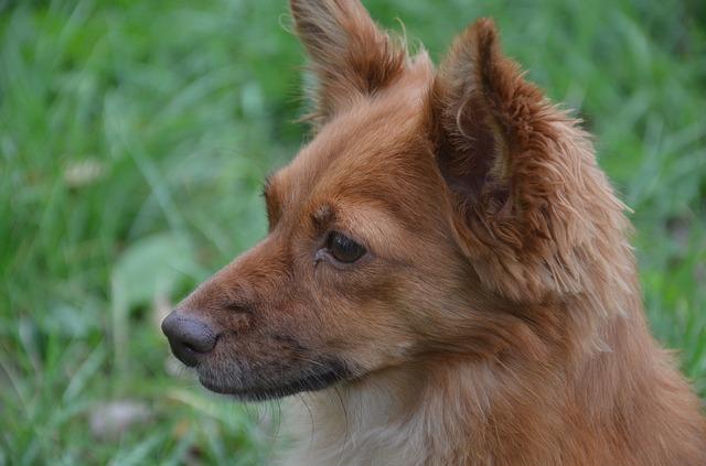 Patologie ossee nei cani: sintomi e prevenzione