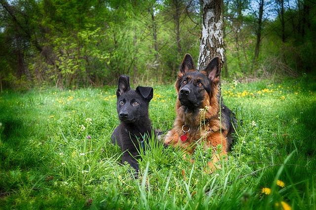 Abbassamento di voce nel cane: cause e rimedi per cane rauco