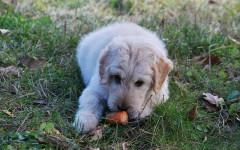Dog Food Brands: a surver of the most popular dog food brands