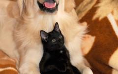 Cane e gatto con occhio rosso: cause e cosa fare