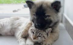 Morte del cane o gatto, quali sono gli obblighi di legge e la burocrazia