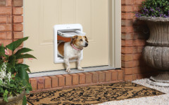 Dog Door: guide to getting your pet the best dog door