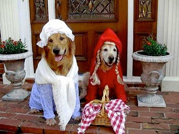 dog_halloween_costumes_17