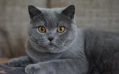 Il tuo gatto ti considera il padrone ideale? Come capirlo?