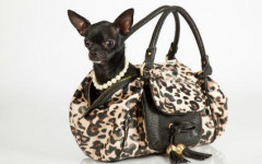 Cani da borsetta: maltrattamento animali o mode umane?