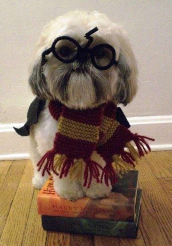 Disfraz perro: ideas para disfrazar a tu perro