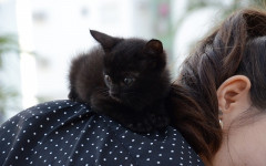 Gatti in spalla: perché ad alcuni gatti piace stare sulle spalle?