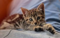 Gattino con pancia gonfia: cause e cosa fare